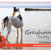 GreyhoundSN