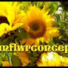 Sunflwrconcepts