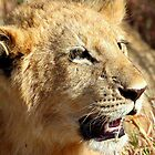 Closeup Lion Cub, Maasai Mara, Kenya  by Carole-Anne