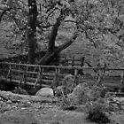 Bridge by jbowler