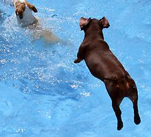 JUMP AND.............SPLASH !!! by Heidi Mooney-Hill