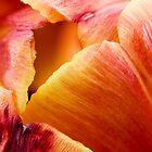 Tulipe by Revenant