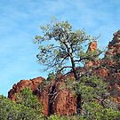 Tall Trees, Rocky Spires by Lynda Lehmann