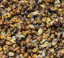 snails and more snails, market, Siracusa, Sicily by Andrew Jones