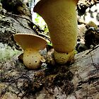 Fungus Cups by cardiocentric