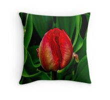 Surrounded ! Throw Pillow