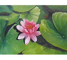 small pink water lily Photographic Print
