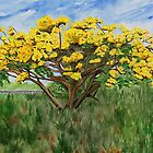 Yellow Flame Tree by tatoguzman