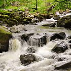Above Aira Force Falls by Jacqueline Wilkinson