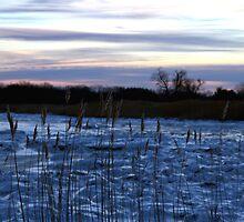 Buckhorn Pond Before Dawn by Kim McClain Gregal