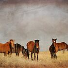 Wild Horses of Shackleford Banks by Joye Ardyn  Durham