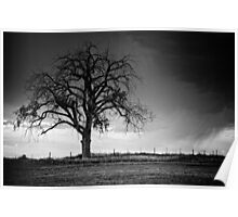 The Tree Of Life B&W Poster