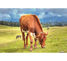Austrian Country Life Photographic Print