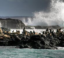 Seal Rocks, Phillip Island by Christine Smith