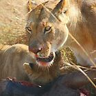 Lions at a Wilderbeest Kill, Maasai Mara, Kenya  by Carole-Anne