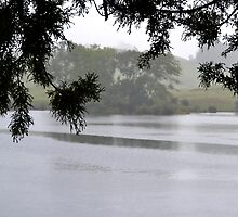 Misty Lake by Lorri Adams