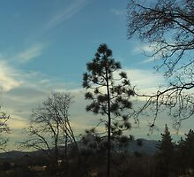 Pine Tree In Front of The Pinnacles by Bearie23