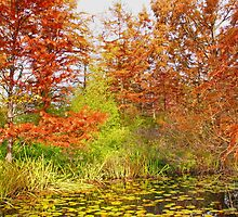 Autumn in VanDusen Gardens, Vancouver. CANADA by AnnDixon