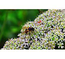 Bee Nice Photographic Print