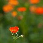 orange flora (1) by codaimages