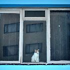 Cat in a window.. by Karen01