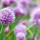 chives.. by Michelle McMahon