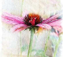 Cone Flower by Brenda Boisvert