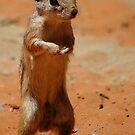 Squirrel by Sanne Hoekstra