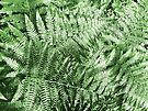 Ferns by Marcia Rubin