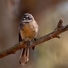 """""""Grey Fantail"""" by Heather Thorning"""