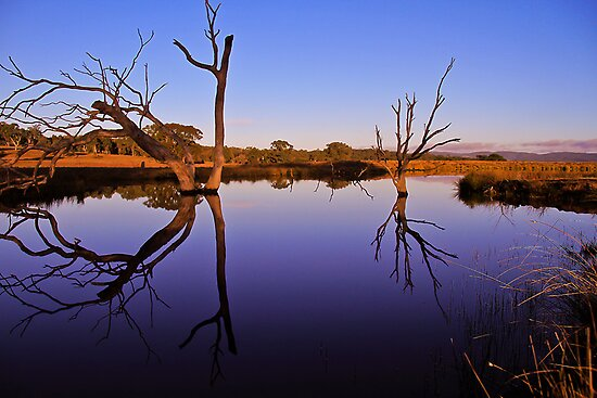 morning reflections by Damian Gobbo
