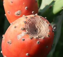 Prickly Pear Cactus Fruit - Indian Fig by taiche