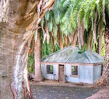 Behind The Gum Tree by Shannon Rogers
