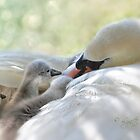 A tender moment by Lyn Evans