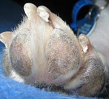 Puppie Foot by Jo Ralston