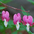 Three Bleeding Hearts by Marjorie Wallace