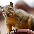 squirrel  by Robby Ticknor