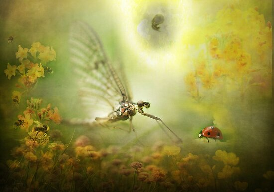 The Mayfly told the Ladybird of his Dream...! by polly470