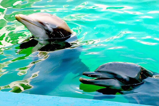 Dolphins at the aquarium by ♥⊱ B. Randi Bailey
