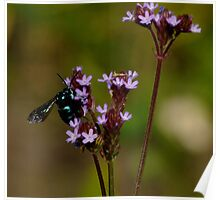 Cloak and Dagger Cuckoo Bee Poster