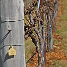 Chardonnay by CaDra