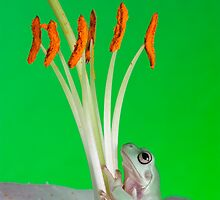 Reptiles and frogs by AngiNelson