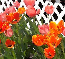 Tulips in Telford by denisedkane