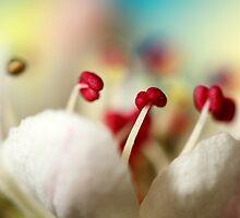 Candy Rainbow by Sharon Johnstone