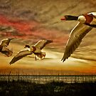 Shelduck Sunset by Tarrby