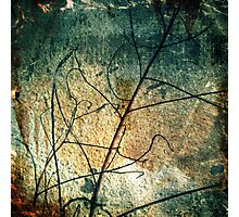 Branched Photographic Print