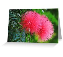 Pink Fuzzy Greeting Card