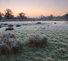 Cold March morning #4 by Christopher Cullen