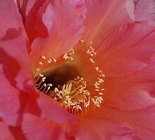 Echinopsis Up Close by Ron Hannah