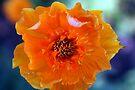 Orange crush by homesick